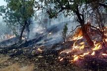 سودجویان زغال عامل آتش سوزی کوه حاتم بهمئی بودند