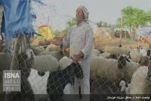 وضعیت دامها در مناطق سیلزده خوزستان
