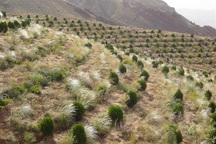 2500 هکتار زمین مستعد جنگل کاری در زنجان شناسایی شد