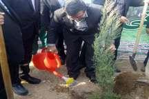 استاندار قزوین یک نهال در شهرک صنعتی کاسپین غرس کرد