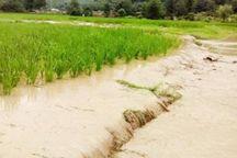 ۹۲۵ میلیارد ریال کمک بلاعوض به کشاورزان سیلزده گلستان پرداخت شد