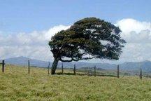 وزش باد شدید در خراسان رضوی پیش بینی می شود