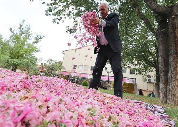 جشنواره گل محمدی در روستای منشاد مهریز برگزار شد