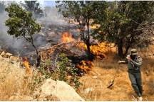 حدود یک هکتار از جنگل های گیلانغرب در آتش سوخت