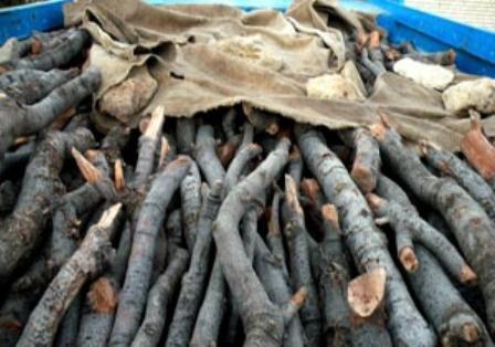 ماموران حفاظت از جنگل های کازرون یک تن هیزم قاچاق کشف کردند
