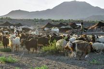 70 خانوار عشایری سیستان به مراتع ییلاقی کوچ کردند