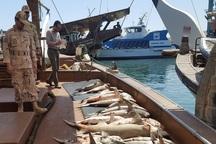 60فروند شناور متخلف درهرمزگان ازصید محروم شدند