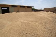 زنجان رتبه دوم کشوری خرید گندم را بدست آورد