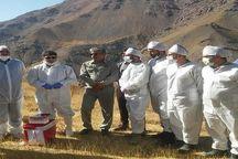 برگزاری ۲ مانور مشترک زیست محیطی در البرز