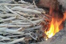 تخریب 3 کوره زغال سازی غیرمجاز در بندرلنگه