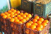 مدیر بازرگانی جهاد کشاورزی: توزیع میوه شب عید در قم آغاز شد