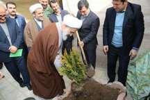 غرس نهال توسط نماینده ولی فقیه در استان و استاندار قزوین در منزل شهیده شاخص سال 95