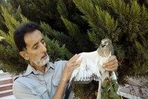 علاقه مندان محیط زیست دو پرنده مصدوم را نجات دادند