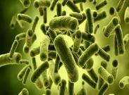 تاثیر باکتریهای معده بر میزان اشتها