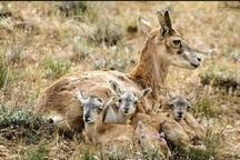 مردم از نزدیکی به زیستگاه حیات وحش خودداری کنند
