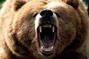 یک کشته و یک مصدوم بر اثر حمله خرس در ایذه