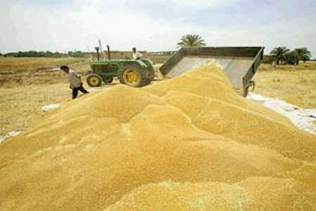 درآمد 2264 میلیارد ریالی کشاورزان کهگیلویه و بویراحمد از محصولات زراعی