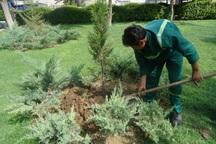 2 هزار اصله درخت در شهرری غرس شد