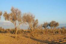 خشکسالی و کمبود آب مهم ترین تهدید عرصه های طبیعی سمنان است