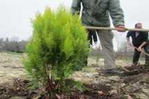 کاشت بیش از 6 هزار اصله نهال در حاشیه رودخانه فصلی مُهر