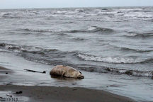 زخم آلودگی دریای خزر چشم انتظار اقدامات عملی برای التیام