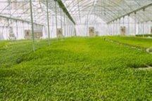 4 طرح کشاورزی در دشتی به بهره برداری رسید