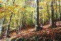 نجات ذخایر ژنی شمشاد هیرکانی، معطل 500 میلیون تومان اعتبار است!/ بیش از 40 میلیون درخت شمشاد در جنگلهای شمال ایران نابود شد