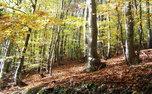 درختکاری به تنهایی برای بهبود اوضاع زمین کافی نیست!