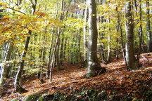 طرح ممنوعیت بهره برداری از جنگل فقط مخصوص شمال کشور است