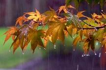 بارش شدید باران و رعد برق در سراسر مازندران