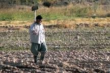 78 هزار خانوار روستایی در آذربایجان غربی بیمه هستند