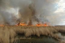 آتش سوزی پایه های برق تالاب شادگان مهار شد