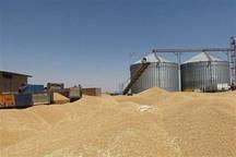 خرید تضمینی گندم  در قزوین از مرز 200 هزار تن عبور کرد