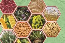 واحد تولیدی اصلاح بذر برکت چرام به بهره برداری رسید