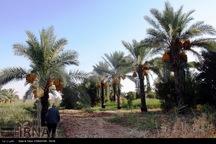 روس ها در احداث نخلستان در غرب کرمانشاه سرمایه گذاری می کنند