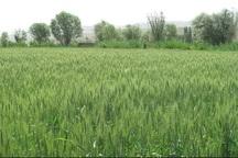 مشکل تغذیه عمده ترین مشکل مزارع استان است