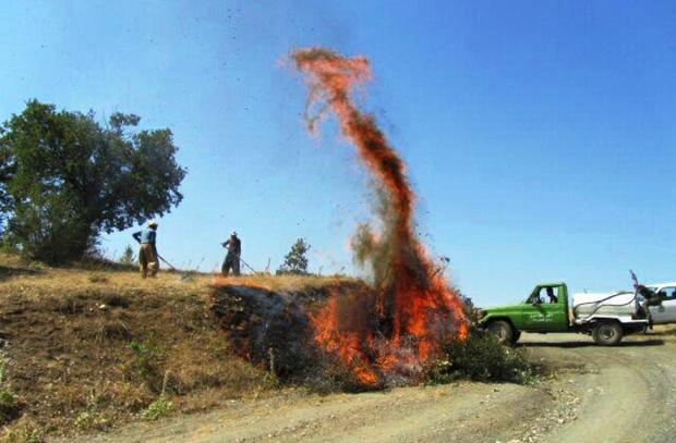امسال پنج هزار هکتار از جنگلهای بانه شاخه زنی میشود