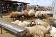 افزایش قیمت دام زنده در روزهای منتهی به تاسوعا و عاشورا