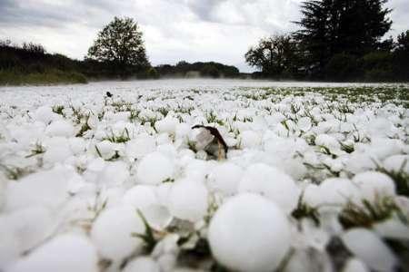 تگرگ 200 میلیارد ریال به کشاورزان سنندجی خسارت وارد کرد