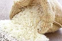چهار مرکز جدید خرید توافقی برنج شالیکاران گیلان دایر می شود