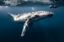 عکس /دنیای زیر آب در عکس روز نشنال جئوگرافیک