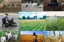 20درصد سرمایه صندوق حمایت کشاورزی صرف صاردات می شود