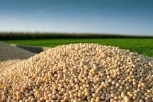 خرید تضمینی بیش از 2 هزار و 551 تن سویا در مازندران
