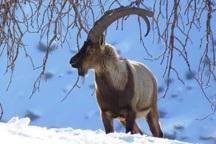 هوا بس ناجوانمردانه سرد است ،کمی مهربانی با حیات وحش