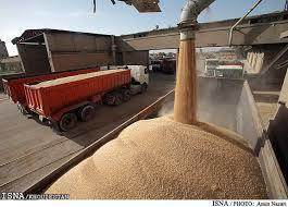 100 هزار تن گندم خریداری شده است