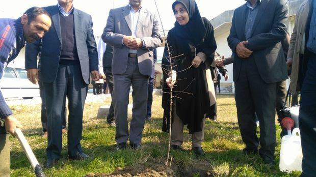 معاون حقوقی رئیس جمهور در دانشگاه مازندران نهال کاشت