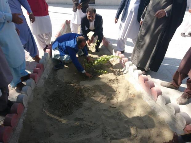 هزار اصله نهال در ایرانشهر غرس شد