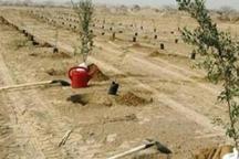250 هزار نهال در استان بوشهر تولید شد