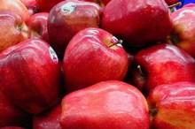 45 درصد باغ های آذربایجان غربی زیر کشت سیب درختی است