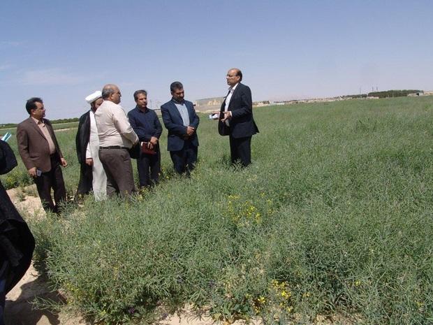 440 میلیارد ریال به کشاورزان یزدی پرداخت شد